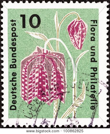 GERMANY - CIRCA 1963: A stamp printed in Germany shows Snake's Head Lily