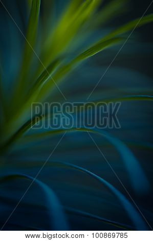 Green Plant Close Up. Abstract Bacground. Soft Focus, Sdof.