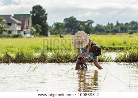 Young Agriculturist Fishing In Swamp By Coop