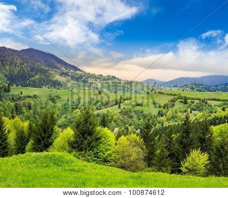 Pine Trees Near Valley In Mountains At Sunrise