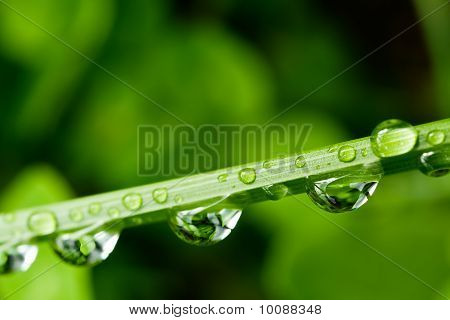 Water Drops On Blade Of Grass