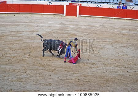 Bullfighting Show At Its Height