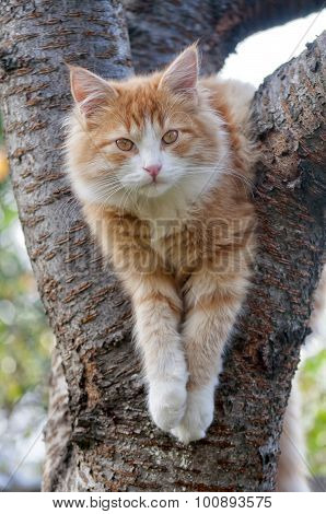 Cat Looks Forward Sitting On The Tree Close Up