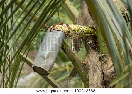 Asia Thailand Samut Songkhram Palm Sugar