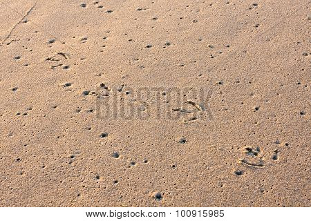 Seagull Tracks on Wet Sand