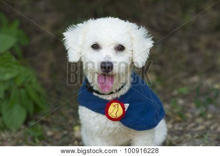 Cute Dog Happy