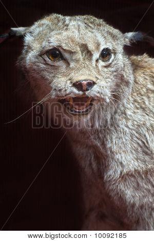 stuffed bobcat