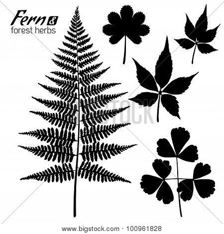 Fern Branch, Oxalis leaf, Wild Grape Leaves, Forest Herbs.