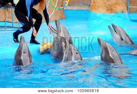 Cute dolphins and trainer in the dolphinarium