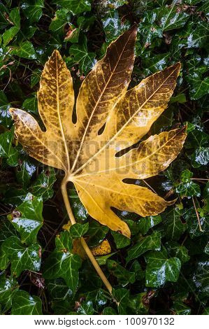 chestnut tree leaf background