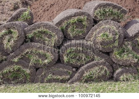 Grass Rolled Sods