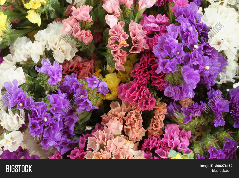 Pink Purple Yellow Image Photo Free Trial Bigstock