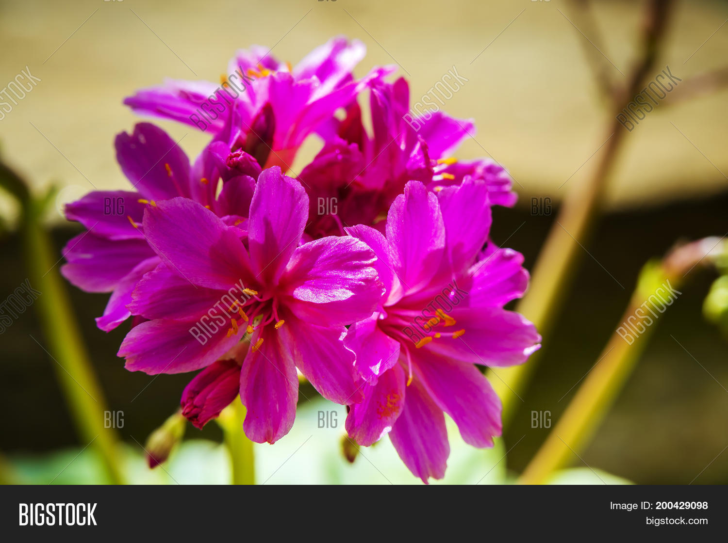 Small Pink Flowers Image Photo Free Trial Bigstock
