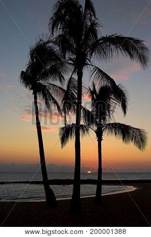 Silhouette Coconut Palm Trees On Beach At Sunset On The Island Of Kauai, Hawaii