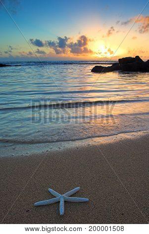 Starfish On The Beach At Sunset, Kauai, Hawaii