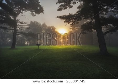 Sunrise through the fog At Thatcher Park in New York.
