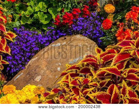 The beautiful colors of many diferent plants and flowers in a garden