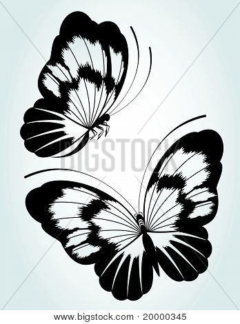 Two black butterfly on a white background