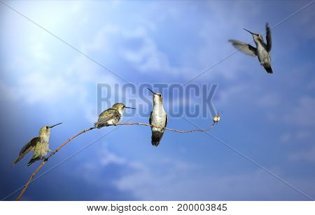 Four humming birds are balanced on a twig /branch, each in a different pose: Sitting, standing and flying. The picture represents freedom, teamwork and happiness.