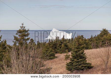 Iceberg And Coniferous Trees Landscape