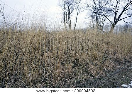 Dry grasses during January in the Rock Run Preserve of Joliet, Illinois.