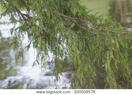 Fishing Bobber Caught In Tree