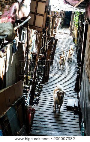 slum pet in bangkok dog man best friend