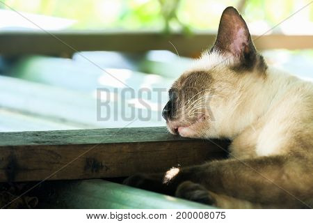 slum pet in bangkok  sleep cat on roof