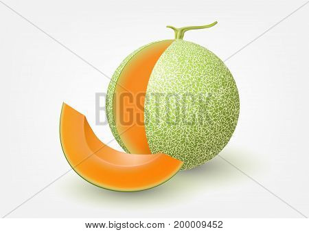 Cantaloupe melon and sliced cantaloupe melon, fruit vector illustration