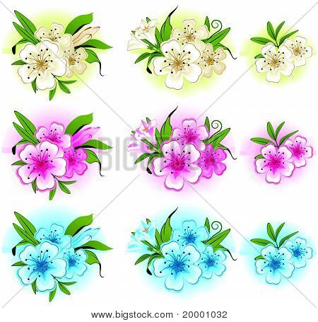 White background with beautiful flowers for the design