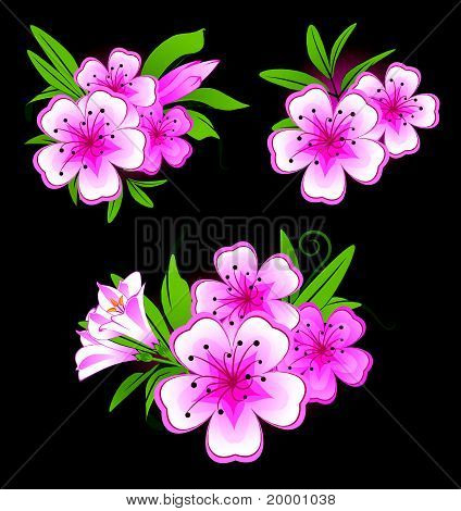 A black background with beautiful flowers for the design