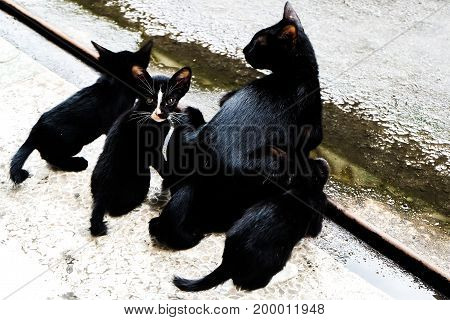 little black cat looks around the street with Cat family Homeless