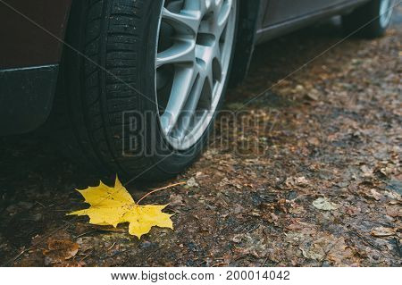 Maple leaf wheel and tyre closeup on dirty autumn road. Traffic safety on slippery leaves