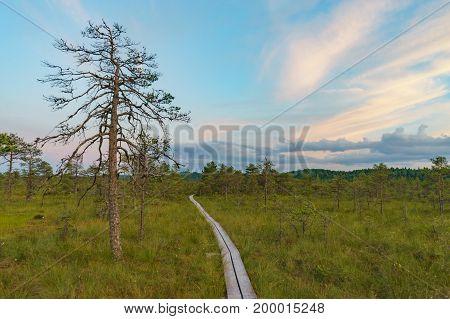 Wooden footpath through Suru Suursoo bog after sunset Estonia