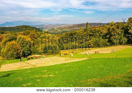 Great Autumnal Rural Area In Mountains