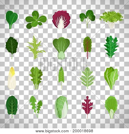 Green salad leaves. Vector vegetarian healthy food leaf set isolated on transparent background