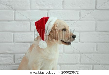 Cute dog in Santa Claus hat against white brick wall