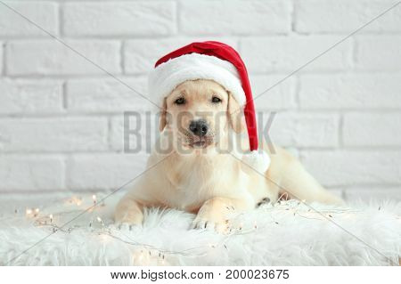 Cute dog in Santa Claus hat lying on floor near white brick wall