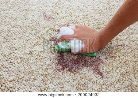 Female hand cleans the carpet with a sponge and detergent.