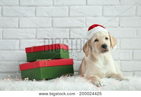 Cute dog in Santa Claus hat lying on floor near Christmas gifts against white brick wall