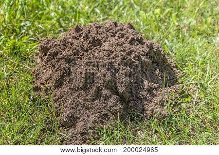 A large hole of a mole in the ground on a field in the summer