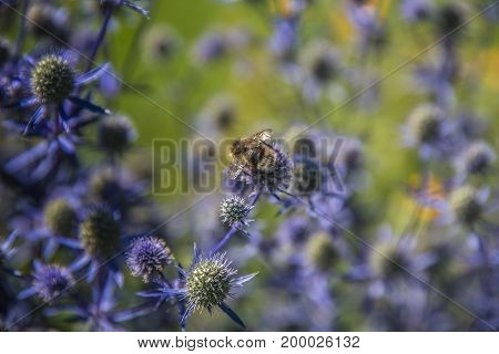A large bumble bee sits on a flower in sunny summer weather