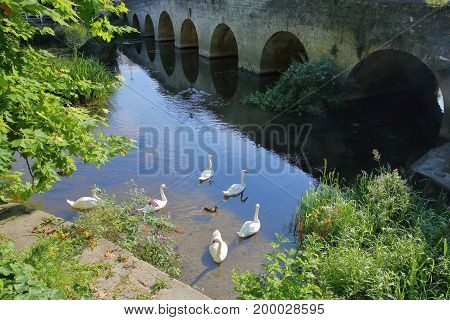 The Old Town Bridge over the river Avon with swans in the foreground, Bradford on Avon, UK