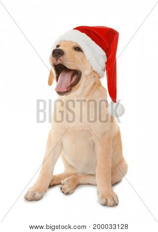 Cute dog in Santa Claus hat on white background