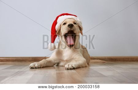 Cute dog in Santa Claus hat lying on floor at home