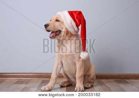 Cute dog in Santa Claus hat sitting on floor at home