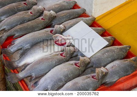 Frozen sea bass In a blue pickup for make food