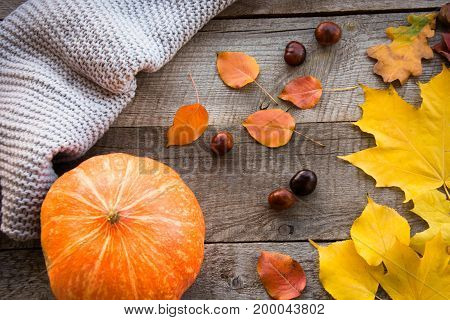 Autumn still life. Autumn leaves warm scarf and pumpkin on wooden board. Top view vintage style. Flat lay.