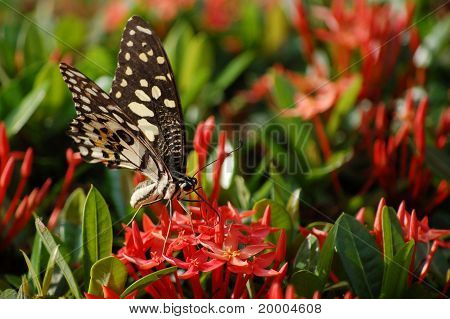 Butterfly and red pin flowers