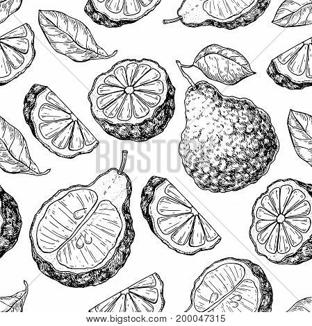 Bergamot vector seamless pattern drawing. Isolated vintage background of citrus fruit with slices. Organic food. Essential oil engraved style sketch. Beauty and spa, cosmetic and tea ingredient.